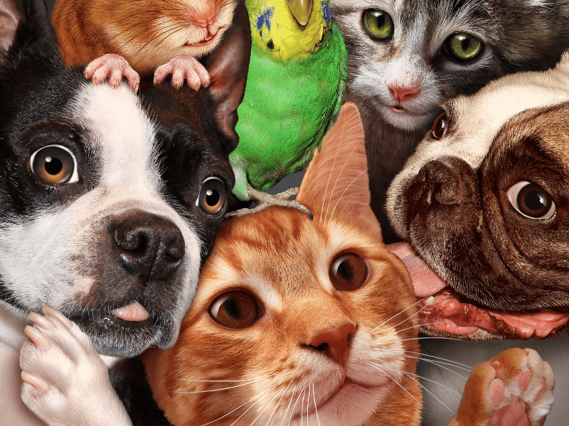 állatok otthon minimag