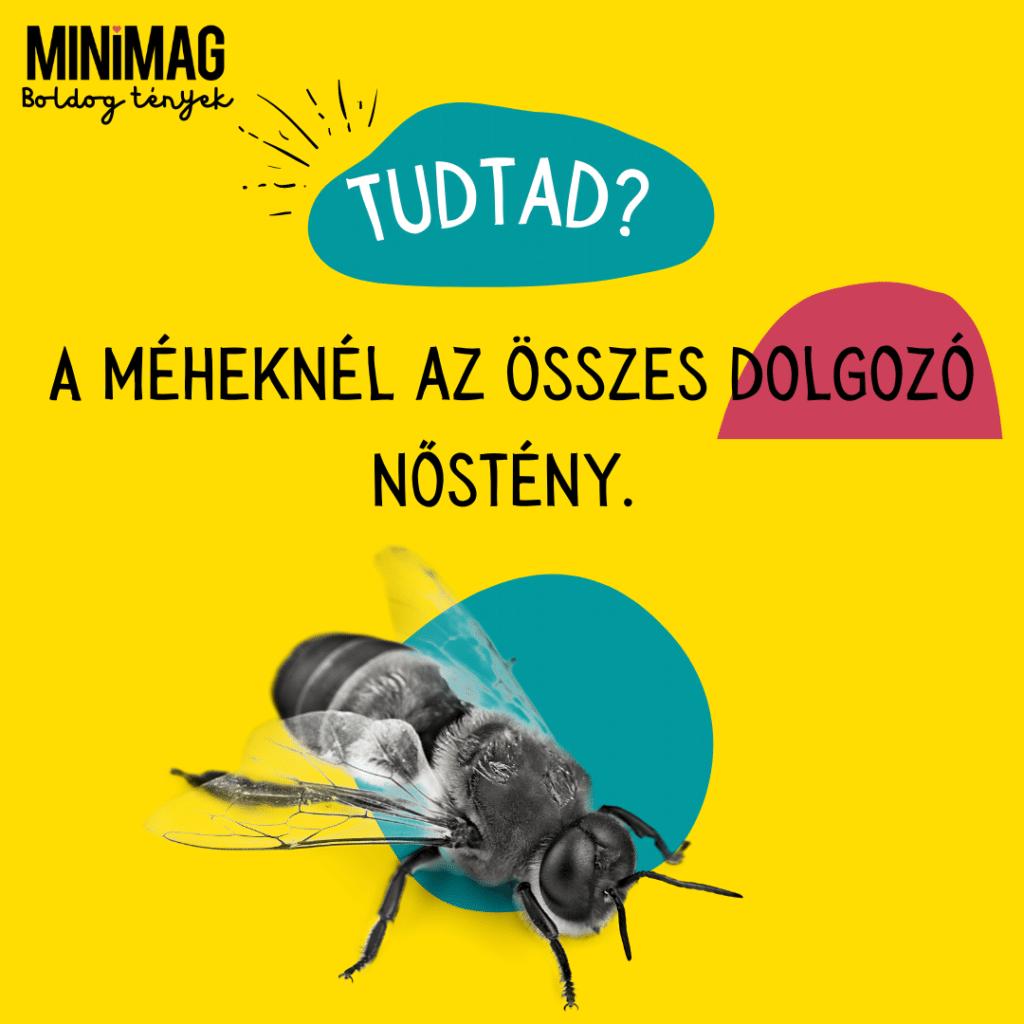 méhek tények