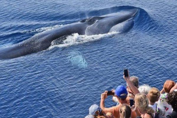 Én a bálnákkal vagyok!