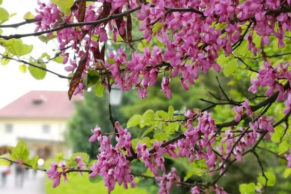 Tavasszal csodaszép a Vácrátóti Botanikus Kert – ide mindenképpen el kell menni a családdal
