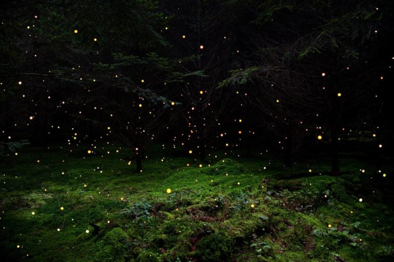 Lélegzetelállító fotók az erdőről