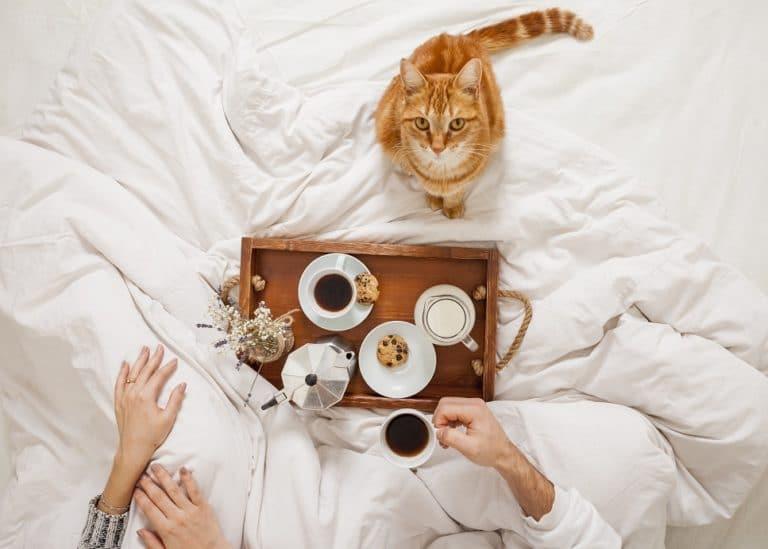 Legjobb trükkjeim 3 - a reggeli készülődés