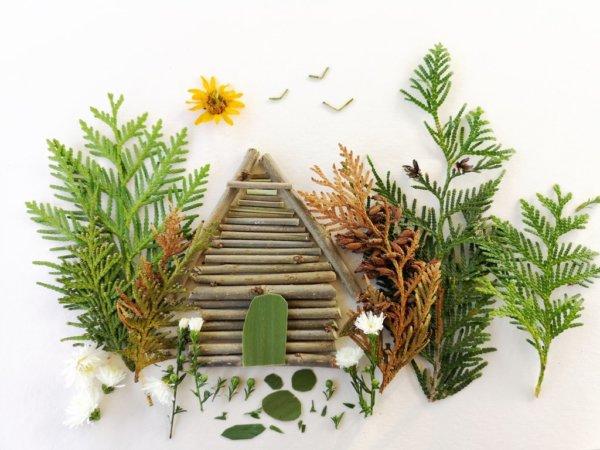 Őszi növény-játékok: készíts képeket növényi részekkel