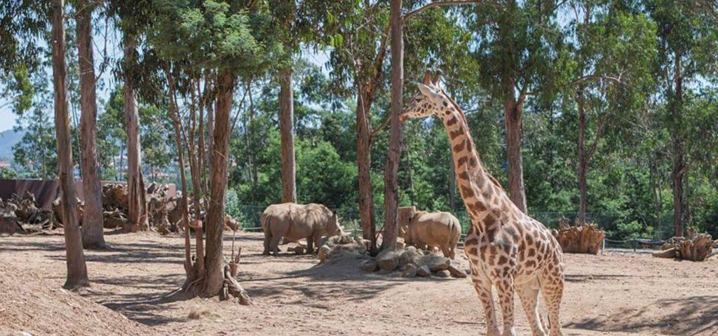 porto állatkert